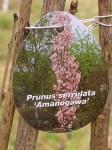 Amanogawa-ein-Fukushima-Mahnmal