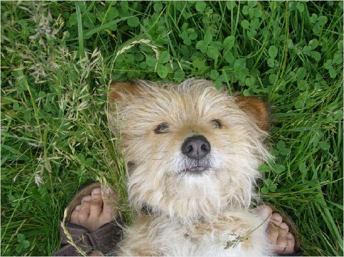 'Chica' ist lieb. Passieren kann trotzdem immer etwas. Daher eine Hundehaftpflicht Haftpflicht Hund Versicherung.