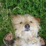 Seit 01.07.11 Versicherungspflicht für Hunde in Niedersachsen