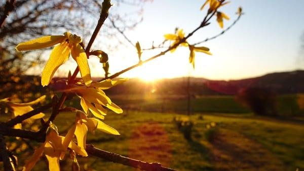 Gegen Angst: Lieblingsmoment Sonnenaufgang in der Natur