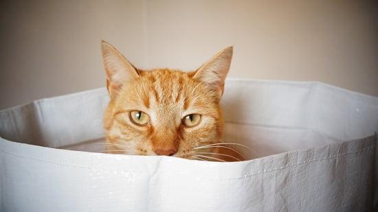 Wer sich mit dem Kleingedruckten einer BU, wie den Nachversicherungsgarantien nicht auskennt, kauft schnell die Katze im Sack. Grafikquelle: Colourbox.com