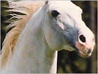 Pferdehaftpflicht - Haftpflicht Pferd